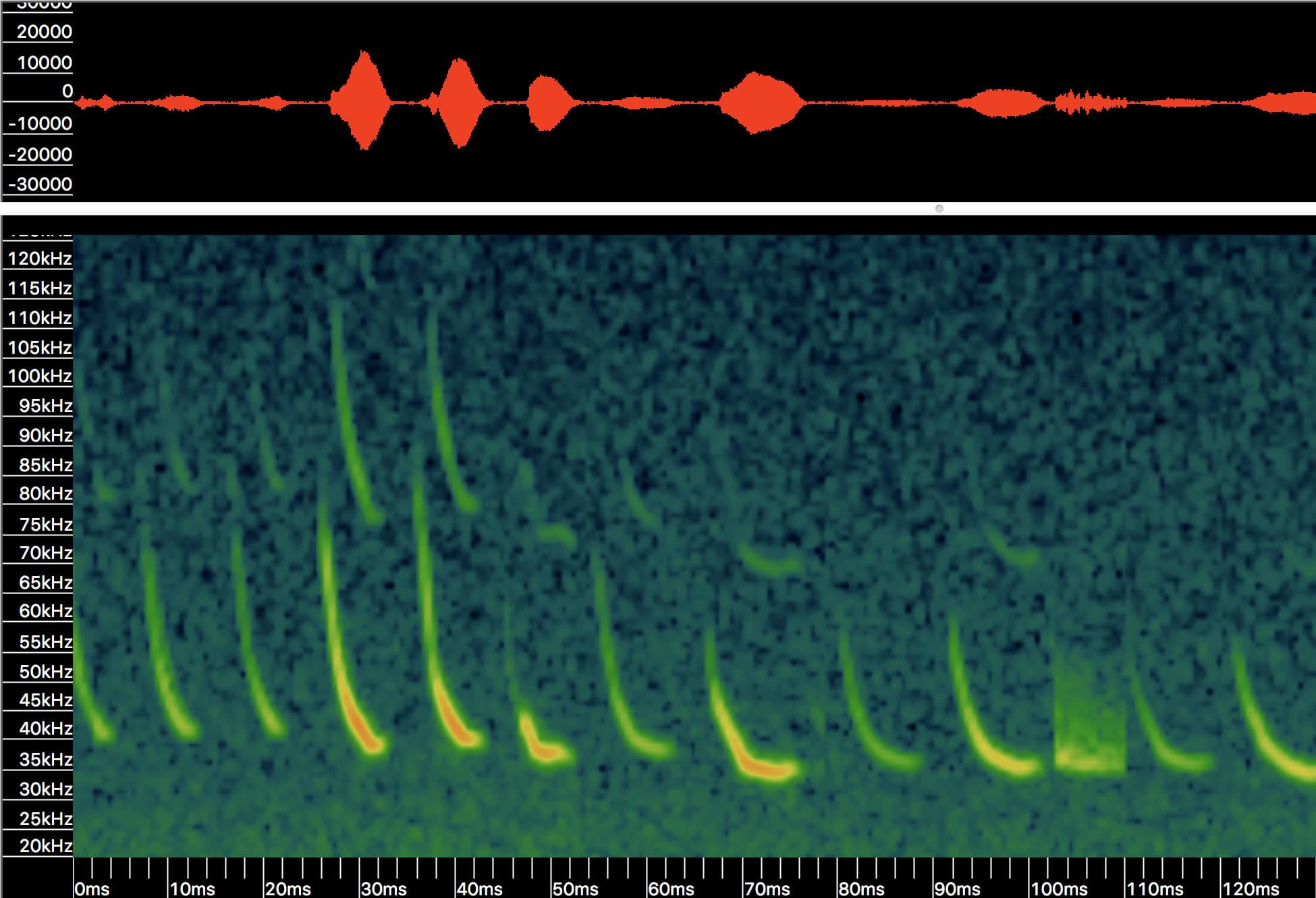 SM4BAT FS Bat Detector